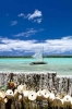 new-caledonian